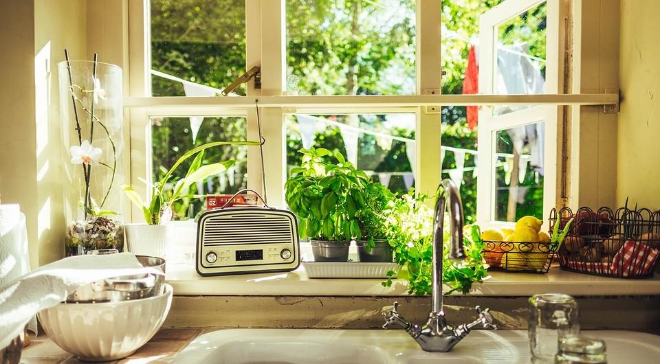 5 причин, по которым не получается вырастить огород на подоконнике