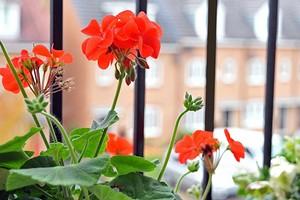 7 круглогодичных растений для открытых балконов