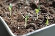 Что сеять в феврале: 13 овощей, цветов и ягод, которые пора сажать на рассаду прямо сейчас