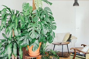 6 крупных растений, которые украсят ваш интерьер