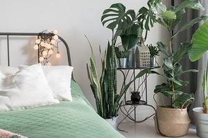 10 классных интерьеров-джунглей для любителей комнатных растений