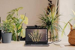 9 комнатных растений, которые стоит поставить на рабочий стол