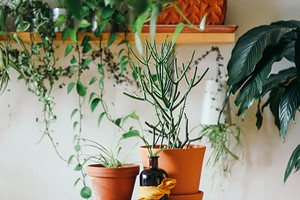 9 самых нестандартных способов расставить комнатные растения
