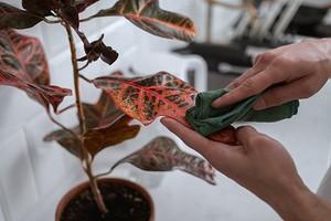 5 привычных комнатных растений, за которыми очень сложно ухаживать
