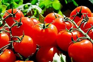 9 лучших сортов томатов для теплицы