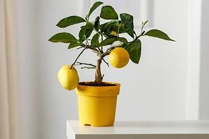 6 домашних растений, которые не нужно часто переставлять (рискуете убить цветы)