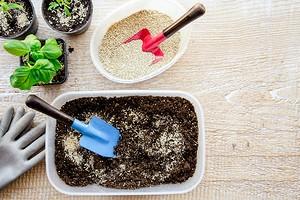 Как подготовить землю для рассады: понятная инструкция