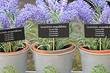 Как посадить лаванду семенами: подробный гид по выращиванию