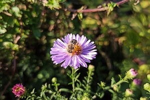6 растений для сада, которые переживут редкие приезды (когда дача — по выходным)