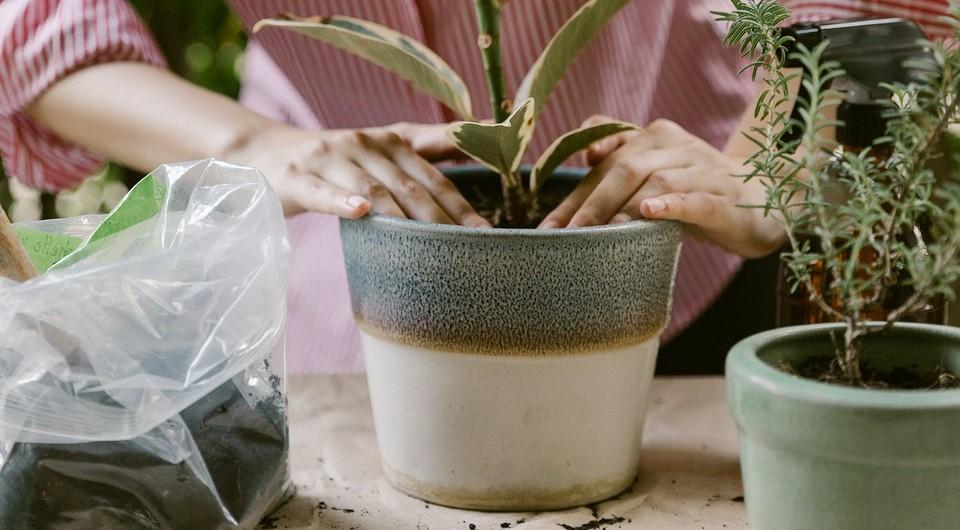 7 ошибок при пересадке растений, которые могут их погубить