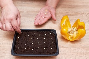 Как прорастить семена перца: 4 простых способа