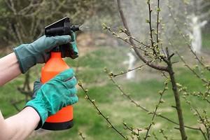 От болезней и вредителей: обработка сада весной