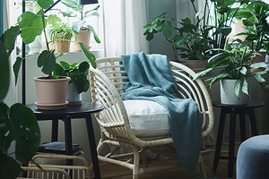 Создаем домашний сад: 8 красивых растений, которые можно купить в ИКЕА