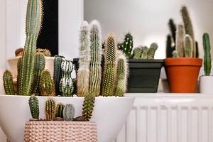 8 полезных советов по выращиванию растений для тех, у кого никогда не получалось