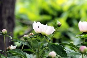 6 садовых кустарников, которые красиво цветут весной