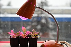 3 доступных идеи для досвечивания рассады в домашних условиях