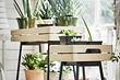 Декоративная теплица и еще 8 полезных новинок из ИКЕА для домашних растений