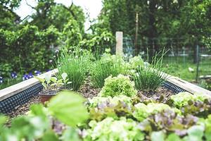 5 важных дел в саду, которые стоит запланировать на май