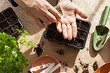 7 эффективных способов предпосевной обработки семян