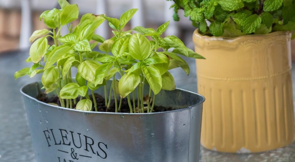 7 идей для создания красивого домашнего огорода (с ним вы обойдетесь без декора!)