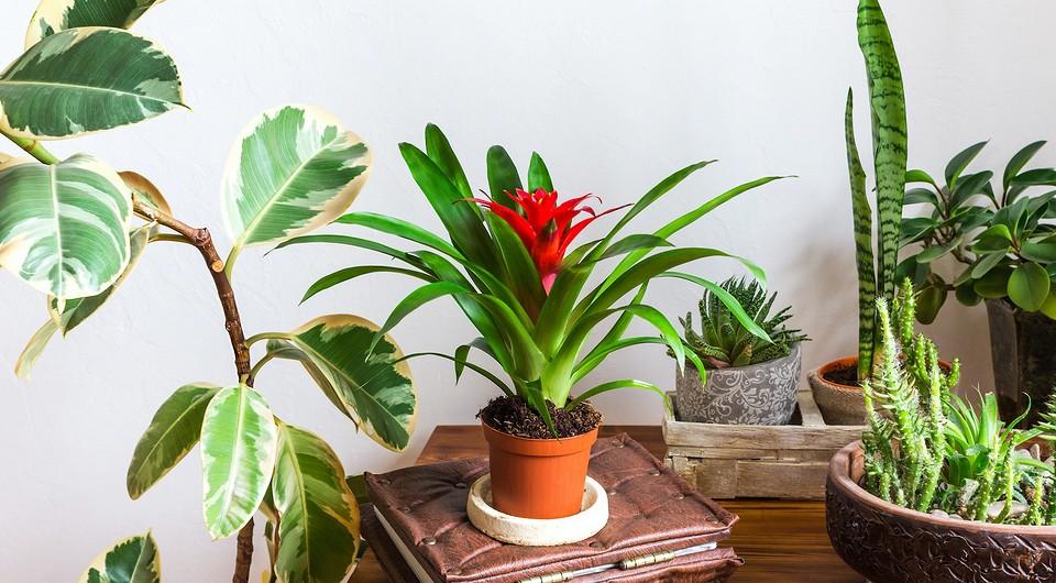 5 эффектных растений для дома, которые на самом деле очень просты в уходе