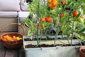 7 овощей и бобовых, которые легко вырастить в контейнерах (если нет места для грядок)