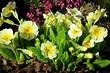 Что посадить на даче в тени: 9 растений, которые легко там вырастут