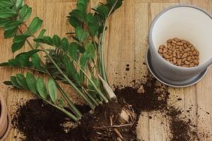 7 доступных материалов, которые можно использовать как дренаж для комнатных растений