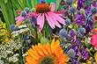 7 дачных растений, которые выдержат самое яркое солнце