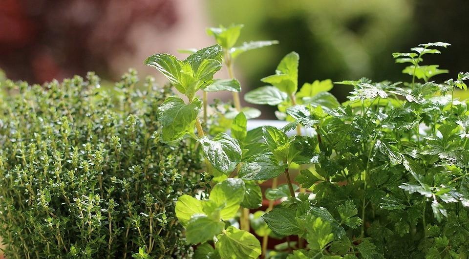 Из трав и специй: 7 способов вырастить пышную и простую клумбу на вашей даче