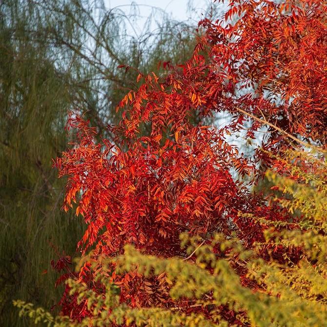7 быстрорастущих деревьев для вашего участка