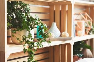 11 идеальных растений для украшения открытых полок (компактные и красивые!)