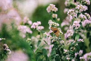 7 натуральных пестицидов для сада, которые вы можете сделать сами