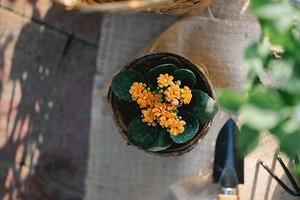 7 растений, которые можно не поливать месяц (или даже больше!)