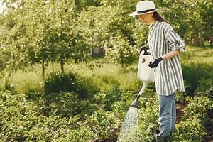Как нельзя поливать растения на даче? 8 ошибочных приемов