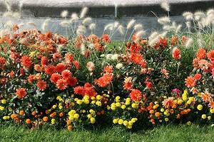 Оформляем клумбу непрерывного цветения: советы и схемы для начинающих
