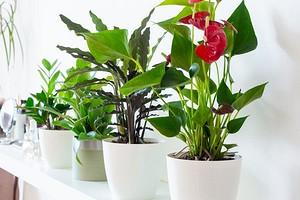 6 растений, которые увлажнят воздух в вашей квартире