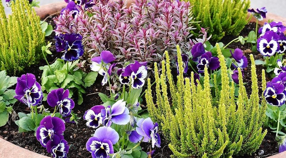 Однолетники и многолетники для клумбы непрерывного цветения: какие цветы выбрать, схема с описанием