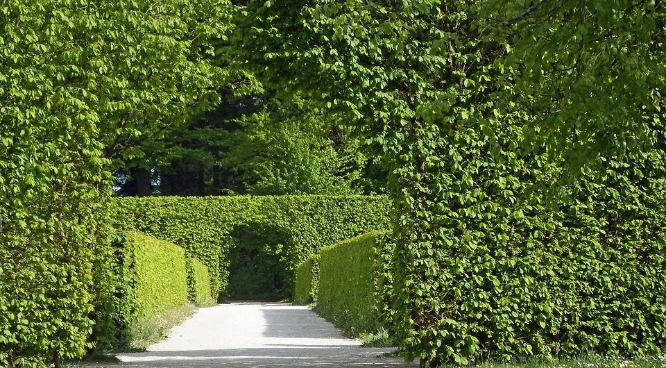 7 вечнозеленых растений для сада: фото и названия, какие посадить на даче