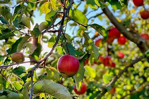 7 способов победить садовых вредителей без пестицидов (вы могли не знать)