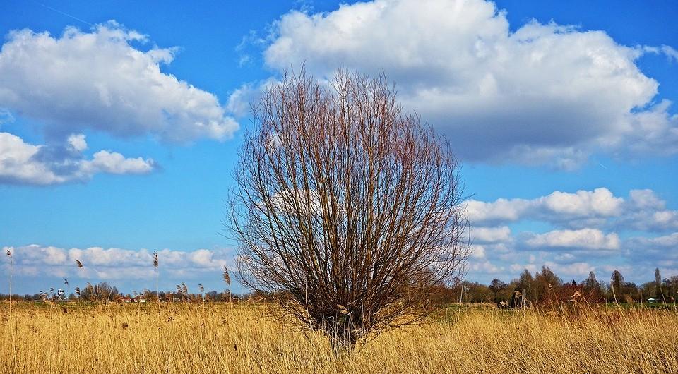 13 засухоустойчивых растений для сада: что посадить на солнечном засушливом солнечном участке