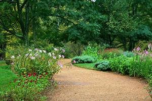 Почвопокровные растения-многолетники для дачи и сада: 11 фото c названиями