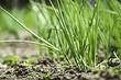 5 опасных паразитов для овощей на ваших грядках (и как с ними бороться)