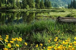 Какие растения любят влажную почву: 14 видов для сада