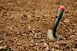 Что посадить на песчаной почве: овощи, декоративные и плодовые культуры