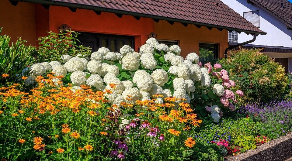 Что посадить рядом с гортензией: 6 вариантов идеального соседства