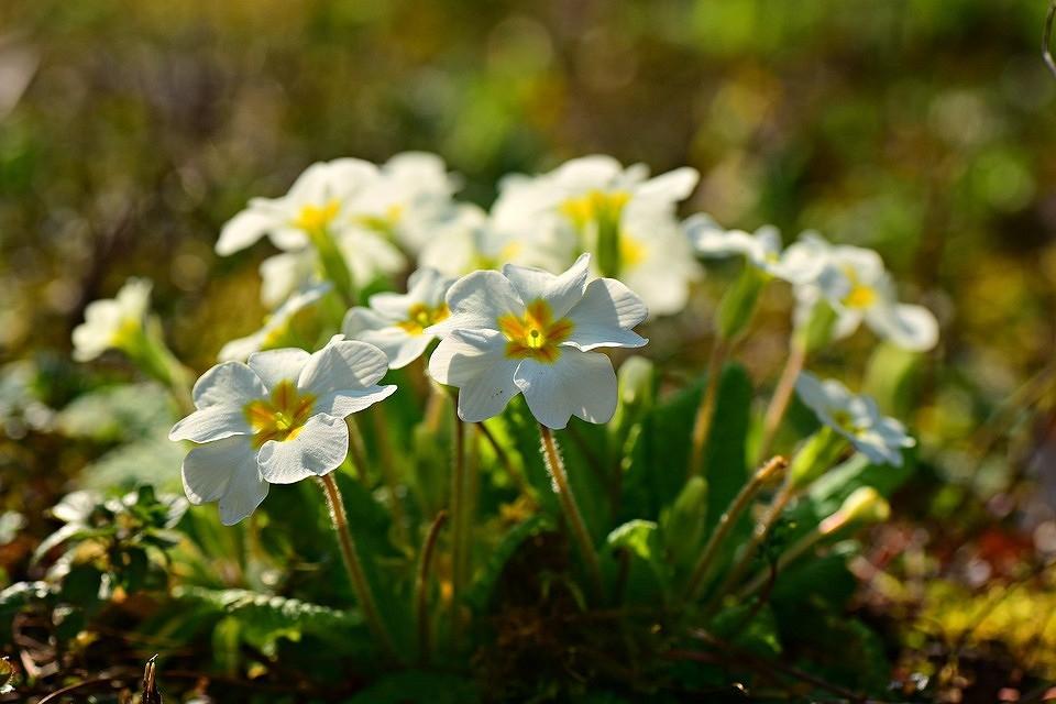 Что посадить в тени за домом: 9 растений и цветов, которые не боятся темноты