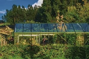Что можно посадить на даче в июне: овощи, зелень и цветы