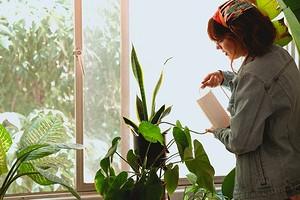 5 ошибок в поливе комнатных растений, которые им навредят