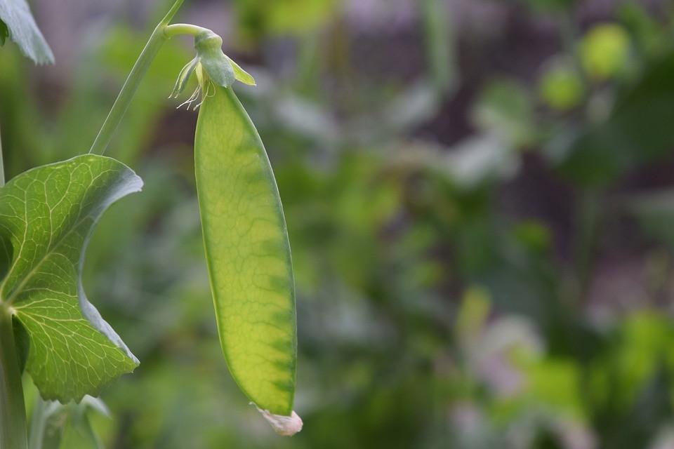 Как посадить много на маленьком участке: 7 советов дачнику